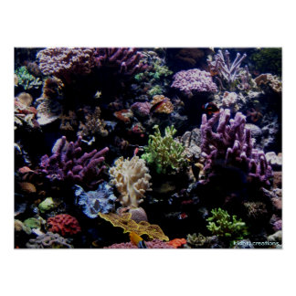 poster - coral reef