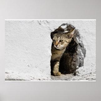 Poster - Cute Greek Kitten on Santorini, Greece