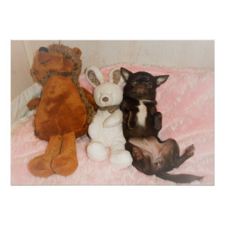 poster dog maroon chihuahua cuddly toys teddy