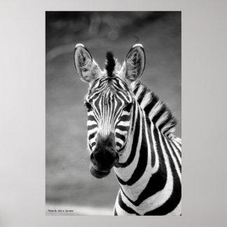 POSTER DSC_8249, Zebra Smile