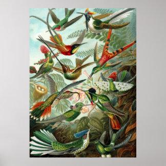 Poster Ernst Haeckel Trochilidae Hummingbird