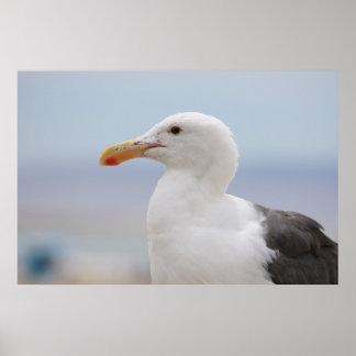 Poster - Gull