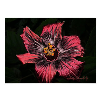 Poster. Hibiscus Poster