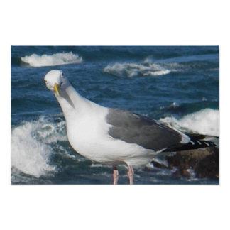 Poster:  Looking Gull