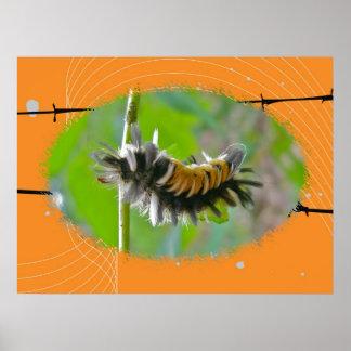 Poster Milkweed Tussock Moth Caterpillar