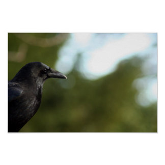 Poster - Nothing to Crow About