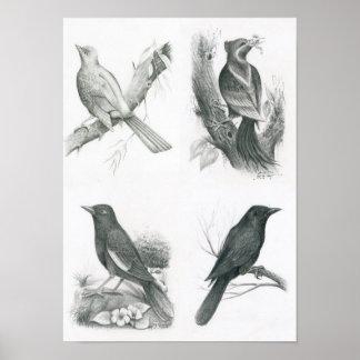 Poster of 4 Cambodian Birds by Vannak Anan Prum