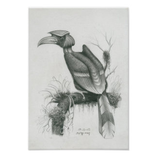 Poster of Cambodian Hornbill Bird by Vannak Prum