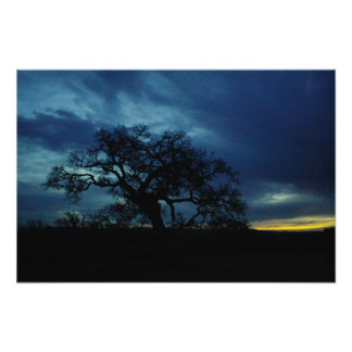 Poster of oak at sunset