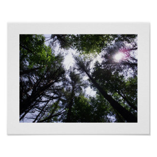 Poster of trees in a forest.