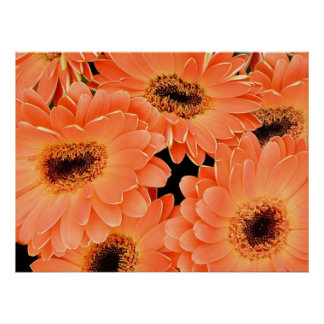Poster Orange African Daisies 36A