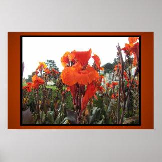 Poster - Orange Gladiolas