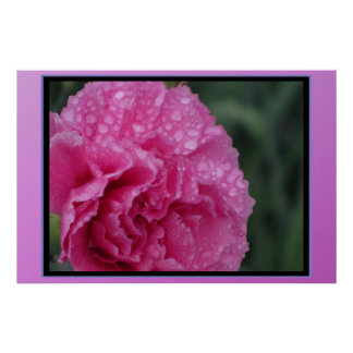 Poster - Pink Flower with Morning Dew