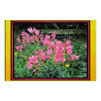 Poster - Pink Flowers