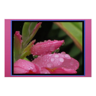 Poster - Pink Flowers with Morning Dew
