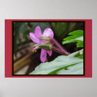Poster - Pink Purple Flower