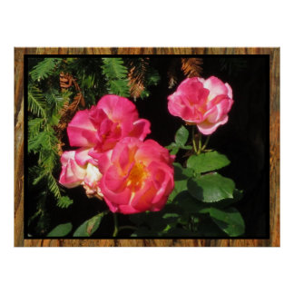 Poster - Pink Roses
