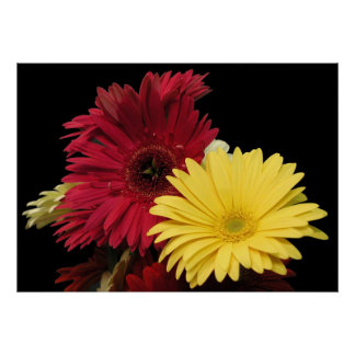 Poster, Red and Yellow African Daisies