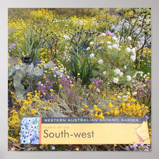 POSTER Spring Wildflowers of Western Australia