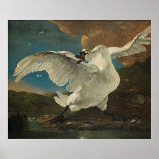 Poster Swan Asselijn