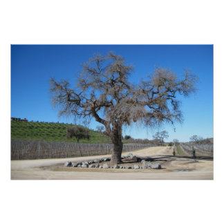 Poster: Tree Near Sculpterra Winery Parking Lot Poster