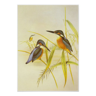 Poster Vintage Kingfisher Birds