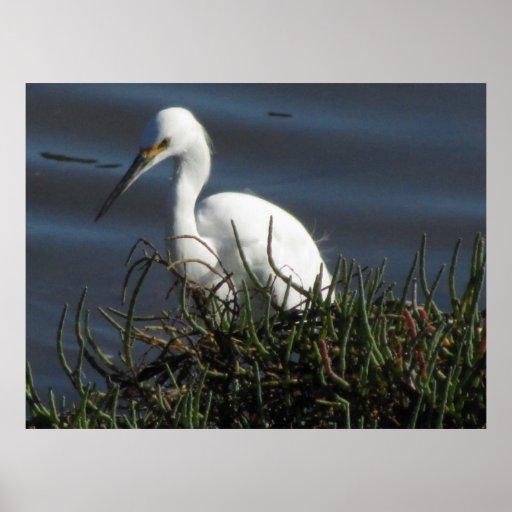 Poster - White Egret