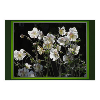 Poster - White Flowers