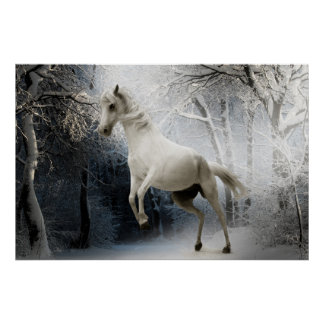 Poster white horse in snow