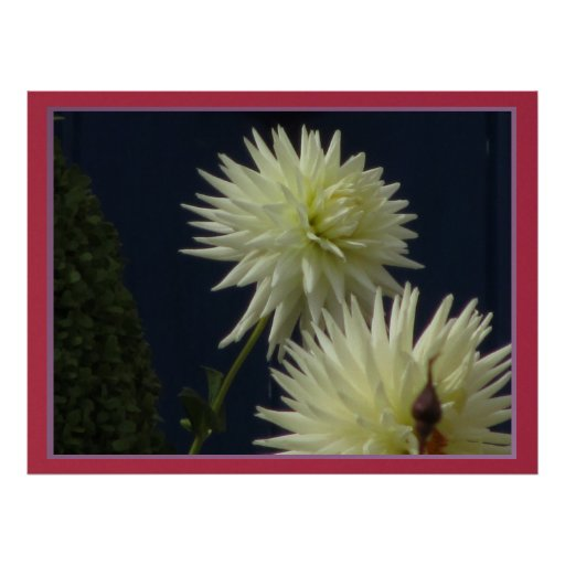 Poster - White Mum Flower
