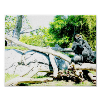 Poster with gorilla animal colorful