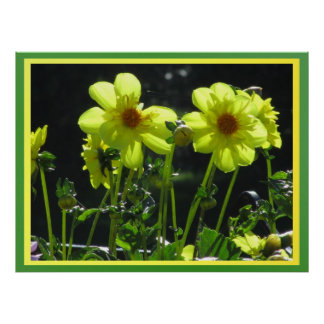 Poster - Yellow Dahlia Flowers