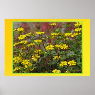 Poster - Yellow Daisies
