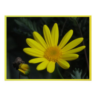 Poster - Yellow Daisy