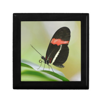 Postman butterfly on leaf gift box