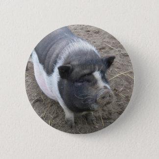 Pot Bellied Pig 6 Cm Round Badge