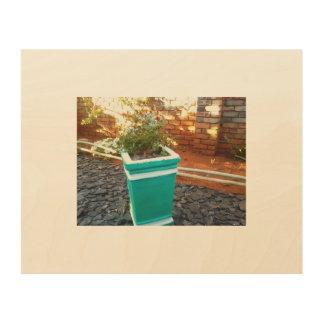 pot plant green wood canvases