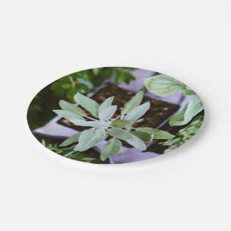 Pot Themed, Various Types Of Plants Grow From Pots 7 Inch Paper Plate