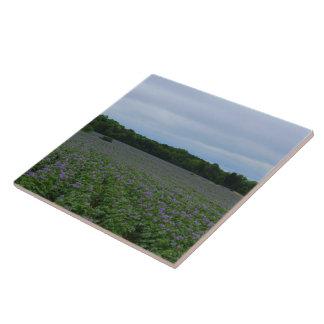 Potato Field Summer 2016 Ceramic Tile
