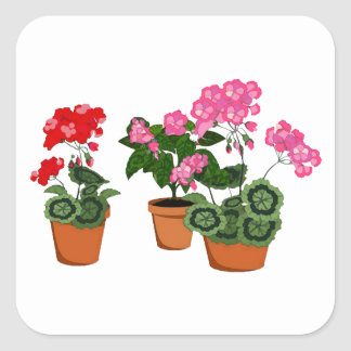 Pots of Geraniums Square Sticker