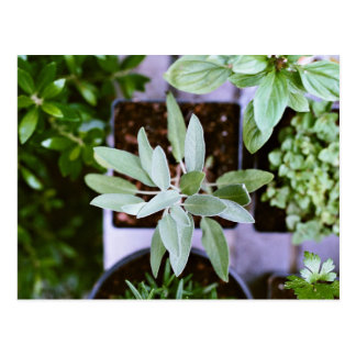 Pots of green plants postcard