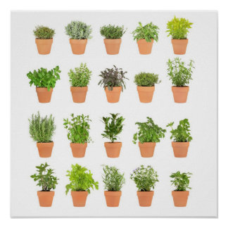 Potted herbal plants customize with your own text print