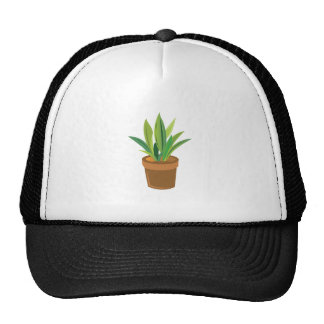Potted Plant Cap