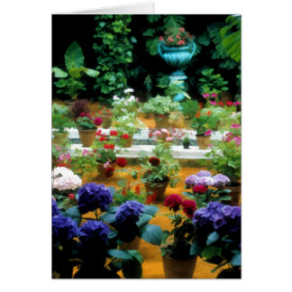 Potted Plants in Beautiful Garden in Seville Spain Card