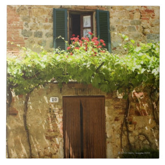 Potted plants in front of a building, Piazza Large Square Tile