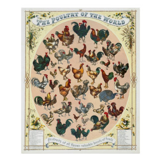 Poultry Breeds 1868 Posters