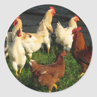 Poultry Classic Round Sticker