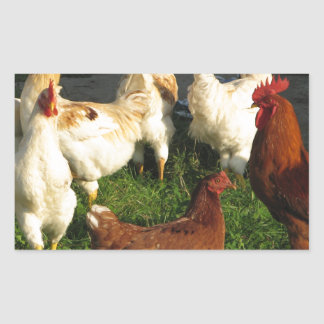 Poultry Rectangular Sticker