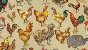 Farm Animals Gifts Name Tags | Zazzle com au