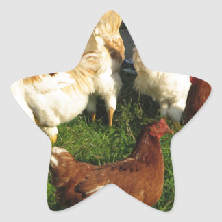 Poultry Star Sticker